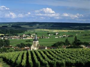 Champagne farm