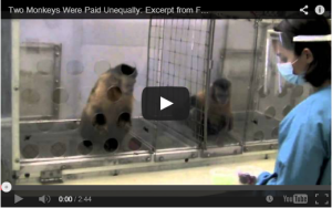 Two monkeys were paid unequally